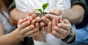 Planta som hålls i händer - starsida