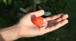 jordgubbe i hand